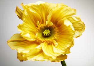 110210_fleurs_01.jpg