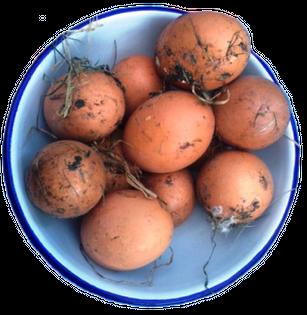 Artificially Dirty Eggs