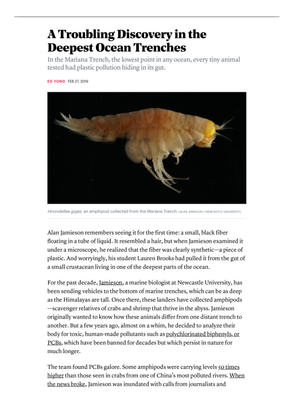 A Troubling Discovery in the Deepest Ocean Trenches