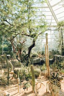 the-steinhardt-conservatory-brooklyn-botanic-garden-glasshouse-greenhouse-by-haarkon.jpeg