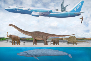 blue_whale_size_comparison_2_by_sameerprehistorica_d5zk3fx-pre.jpg