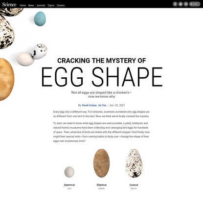 Why do eggs have so many shapes?