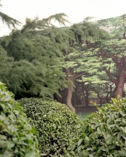 Shanghai forest 2