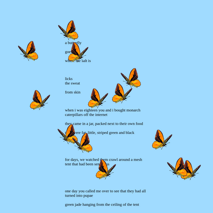 a butterfly goes