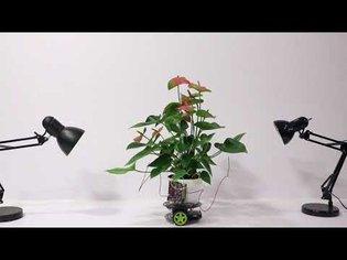 Elowan: A Plant-Robot Hybrid
