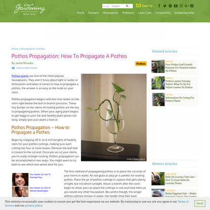 Pothos Propagation: How To Propagate A Pothos