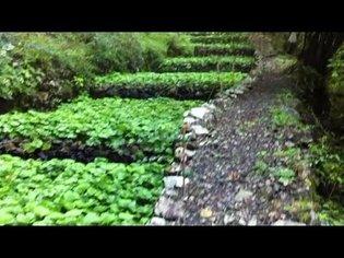 Japan Wasabi Paradise - softypapa