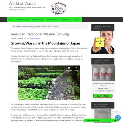 Japanese Traditional Wasabi Growing