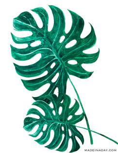 monstra-palm-fronds.jpg