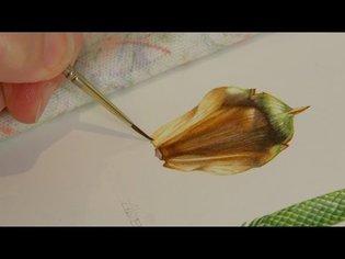 The Art of Botanical Illustration; A Norfolk Island Pine by Angela Lober